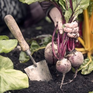 Create a Vegetable Patch